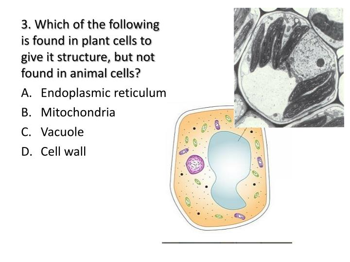 3. Which of the following is found in plant cells to give it structure, but not found in animal cells?