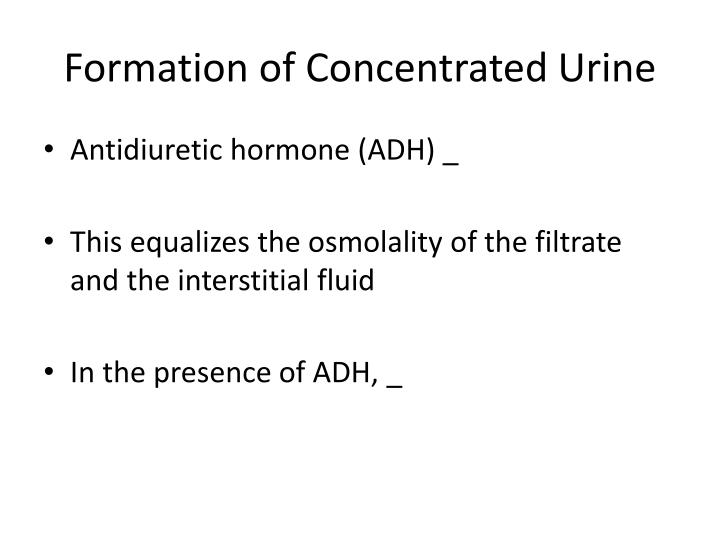 Formation of Concentrated Urine
