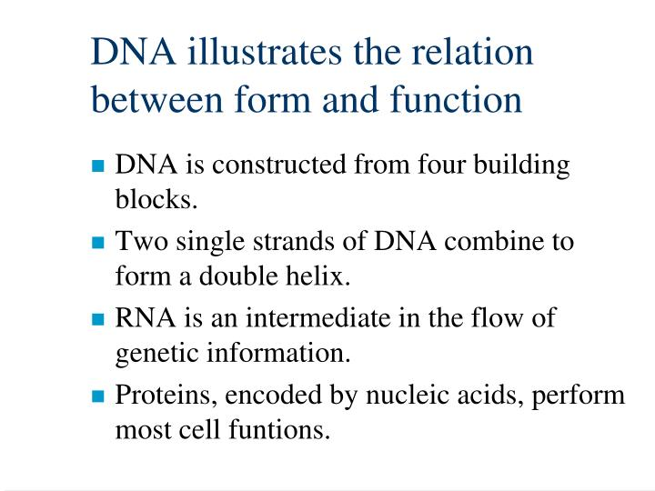 DNA illustrates the relation between form and function