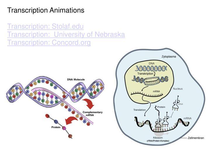 Transcription Animations