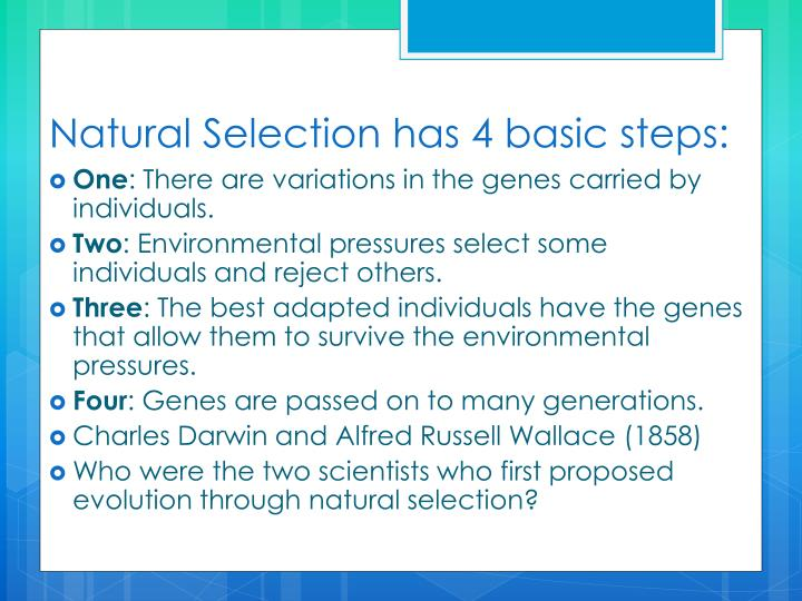 Natural Selection has 4 basic steps: