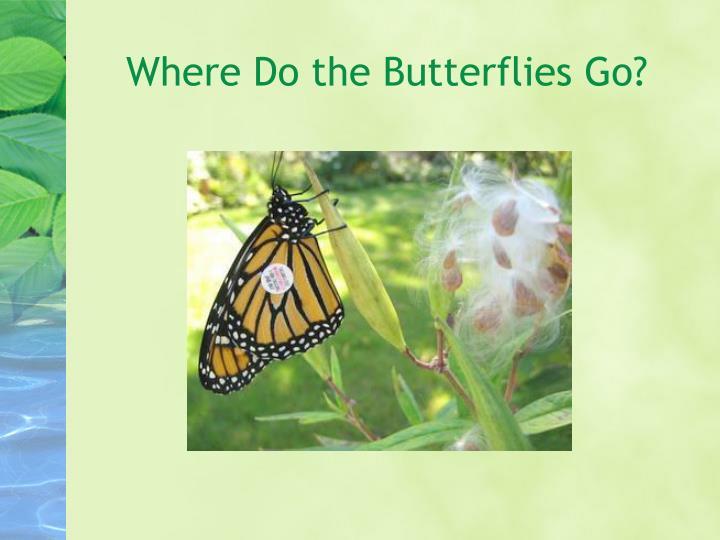 Where Do the Butterflies Go?