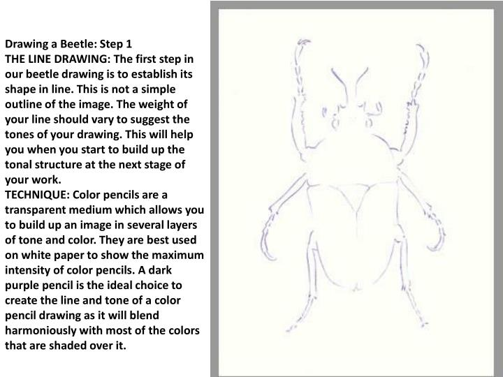 Drawing a Beetle: Step 1