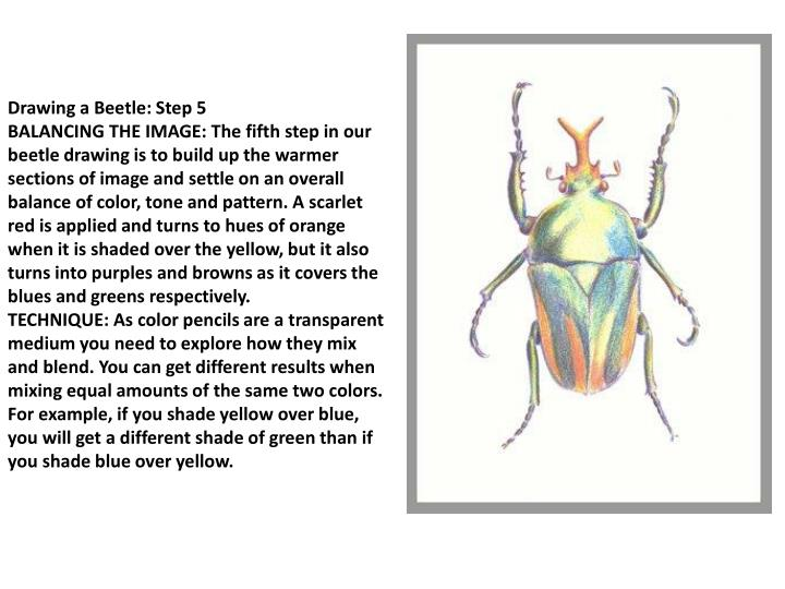 Drawing a Beetle: Step 5