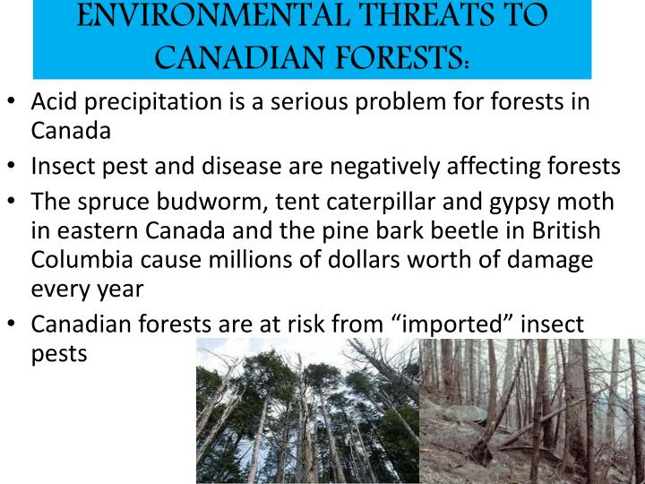 ENVIRONMENTAL THREATS TO CANADIAN FORESTS:
