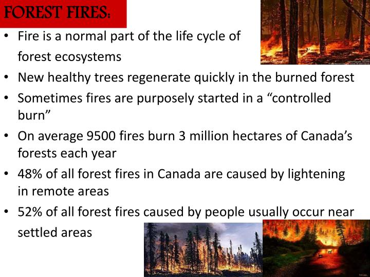 FOREST FIRES:
