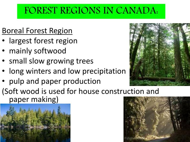 FOREST REGIONS IN CANADA: