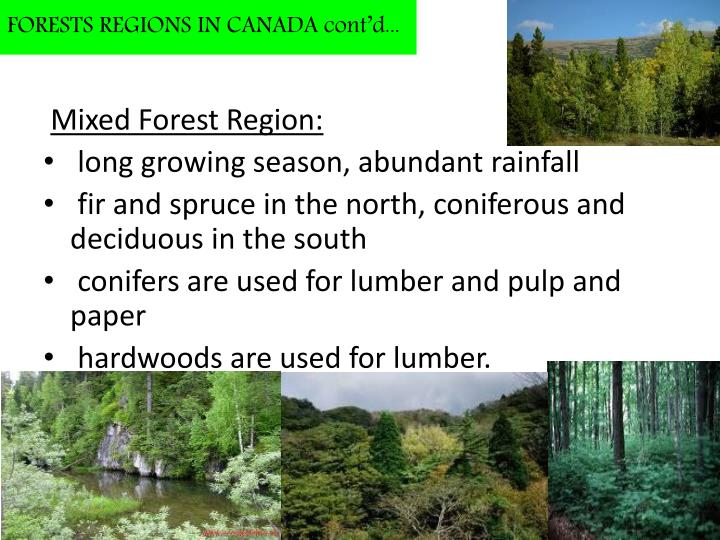 FORESTS REGIONS IN CANADA cont'd...