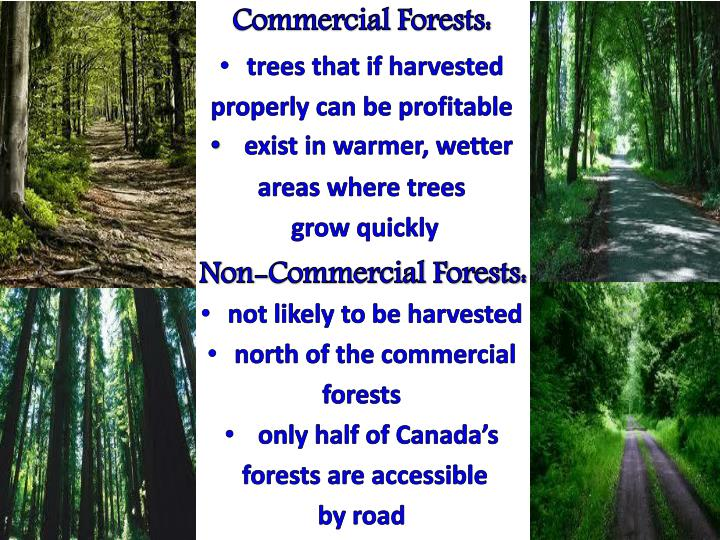Commercial Forests: