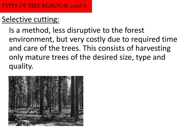 TYPES OF TREE REMOVAL cont'd...