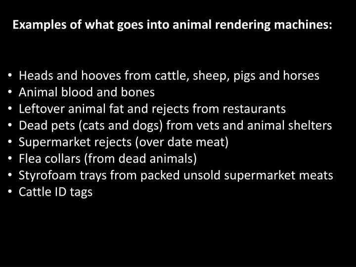 Examples of what goes into animal rendering machines: