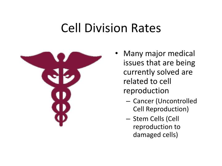 Cell division rates1