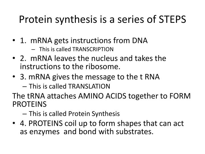 Protein synthesis is a series of STEPS