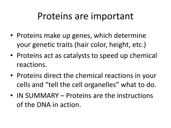 Proteins are important
