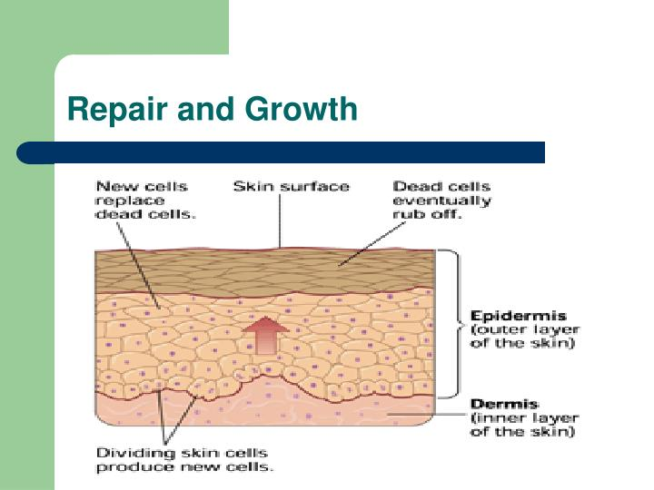 Repair and Growth