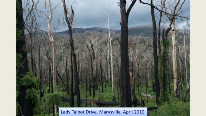 Lady Talbot Drive. Marysville. April 2010