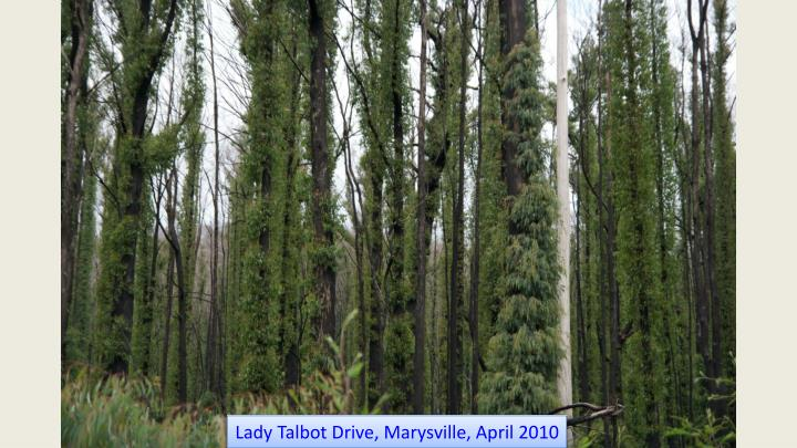 Lady Talbot Drive, Marysville, April 2010