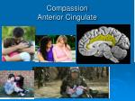 compassion anterior cingulate