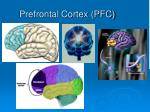prefrontal cortex pfc