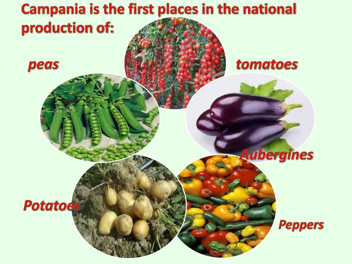 Campania is the first places in the national production of