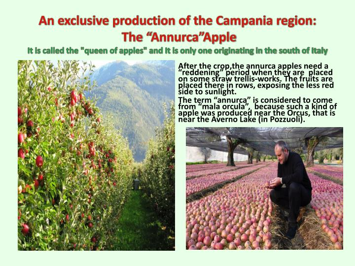 An exclusive production of the Campania region:
