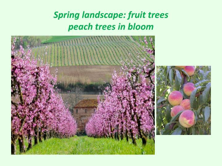 Spring landscape: fruit trees