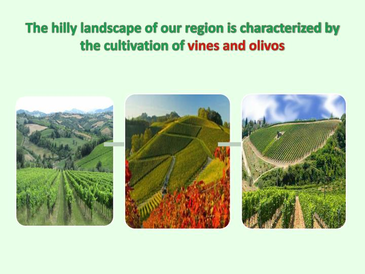 The hilly landscape of our region is characterized by the cultivation of