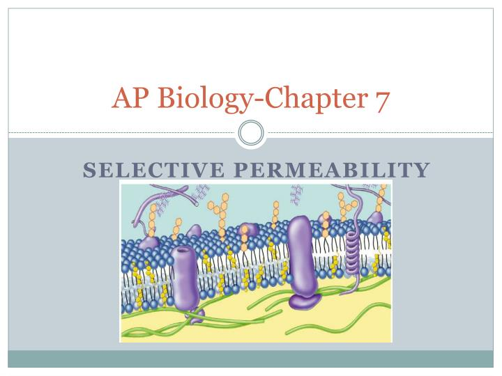 AP Biology-Chapter 7