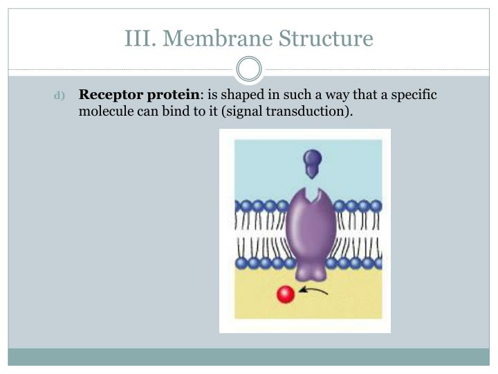 III. Membrane Structure