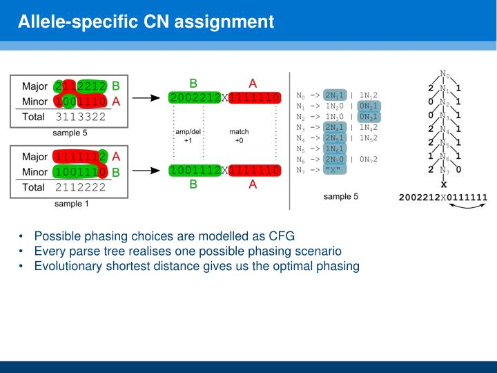 Allele-specific CN assignment