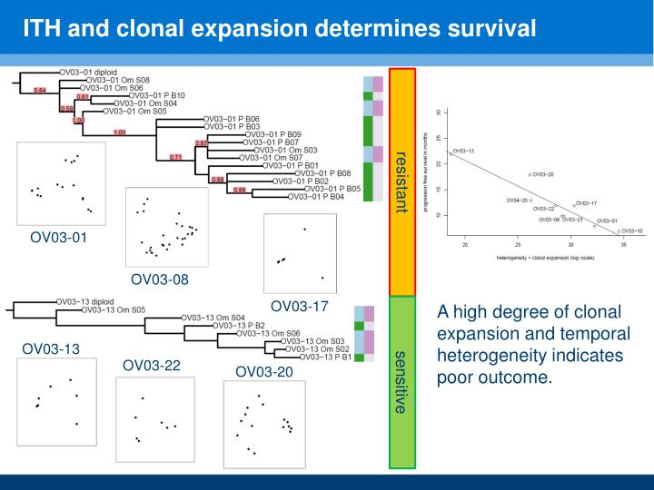 ITH and clonal expansion determines survival