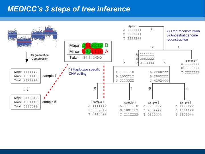 MEDICC's 3 steps of tree inference