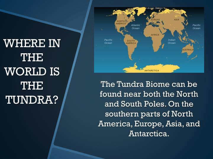 Where in the world is the tundra