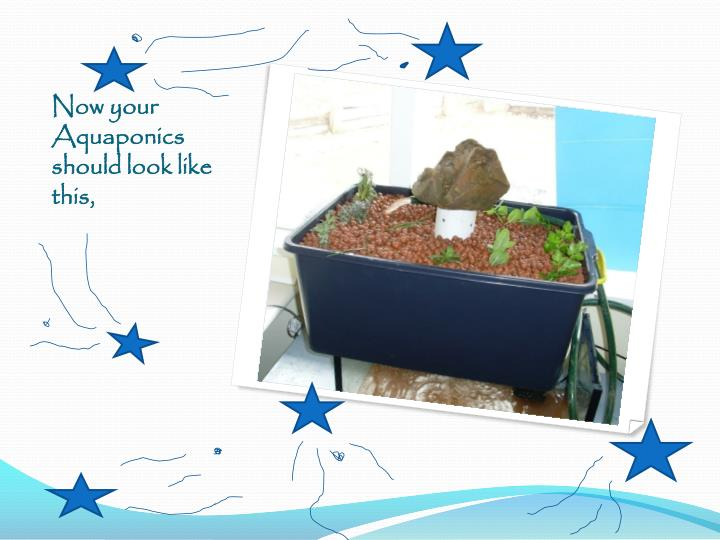Now your Aquaponics should look like this,