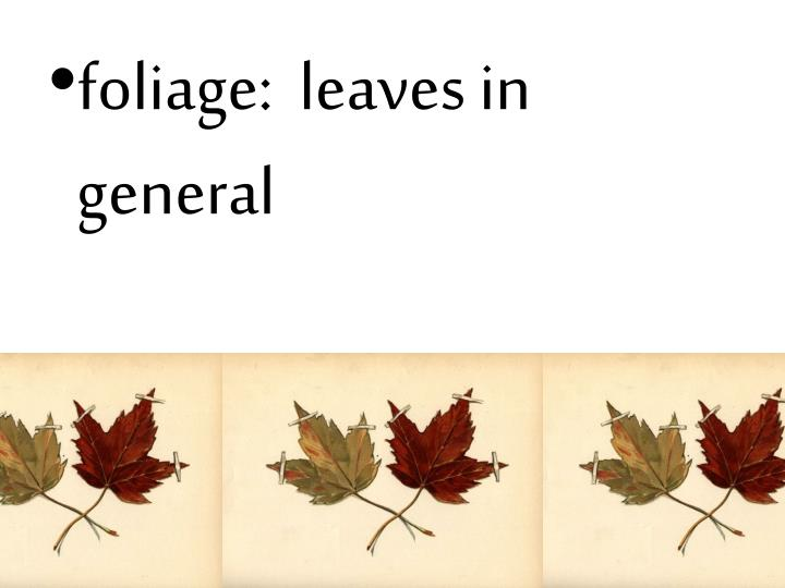 foliage:  leaves in general