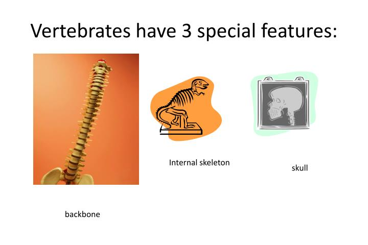 Vertebrates have 3 special features: