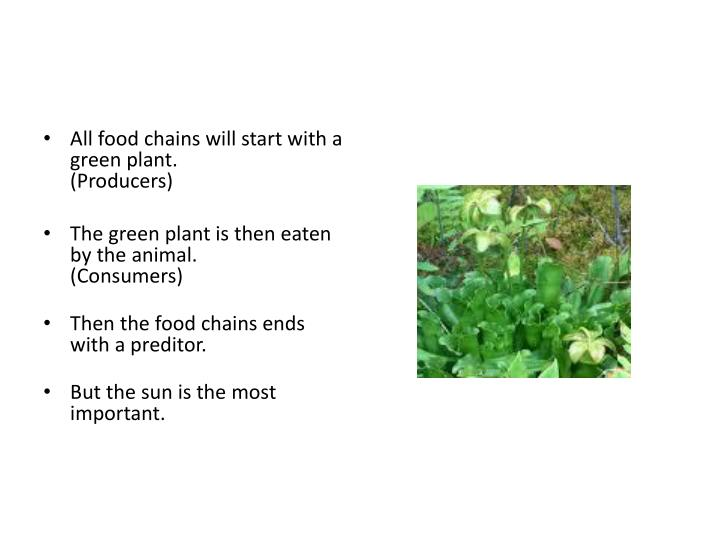 All food chains will start with a green plant.
