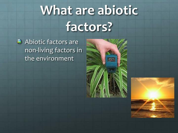 What are abiotic factors?