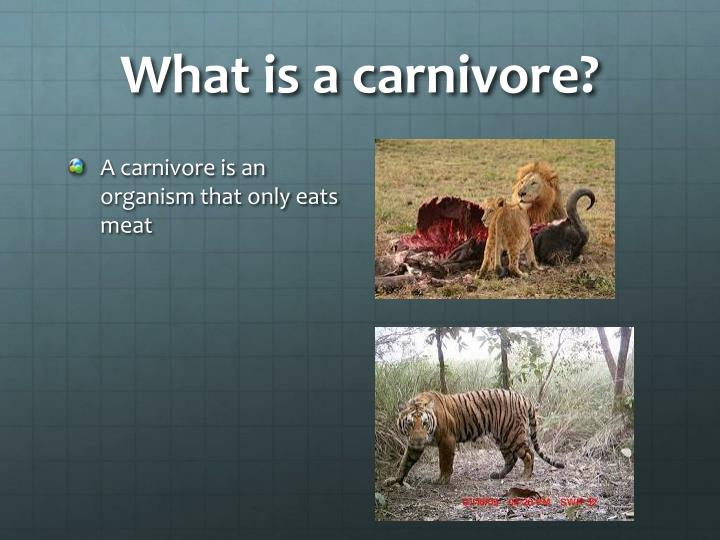 What is a carnivore?