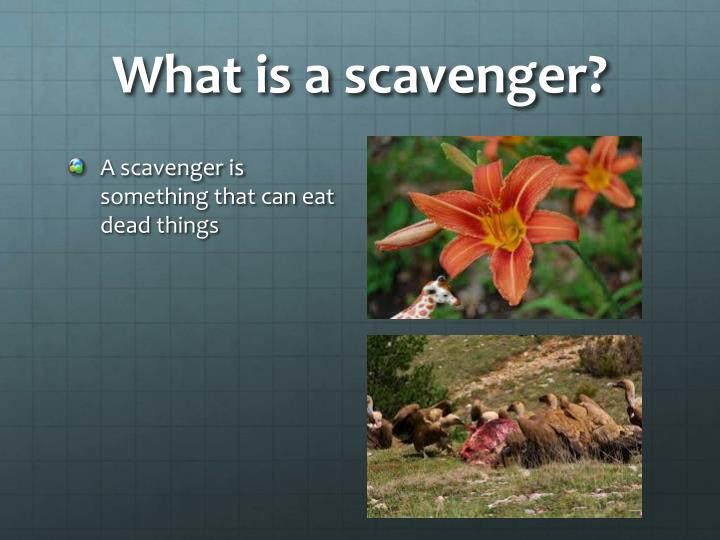 What is a scavenger?