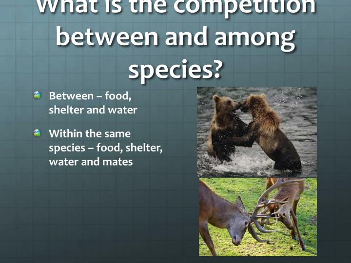 What is the competition between and among species?