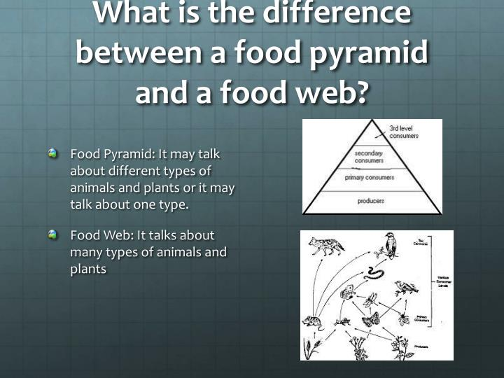 What is the difference between a food pyramid and a food web?