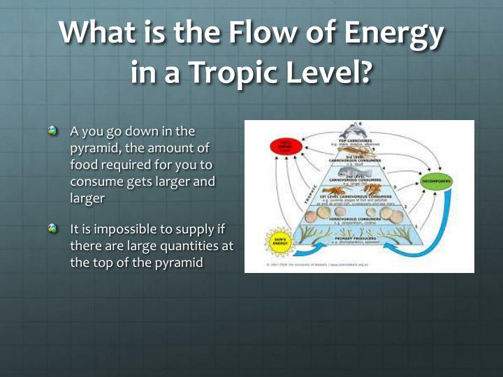 What is the Flow of Energy in a Tropic Level?