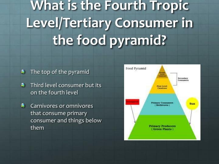 What is the Fourth Tropic Level/Tertiary Consumer in the food pyramid?