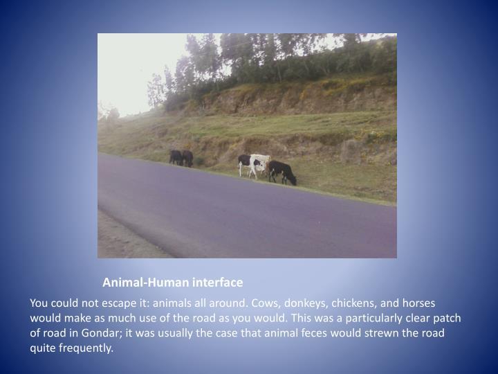 Animal-Human interface