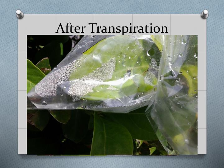 After Transpiration