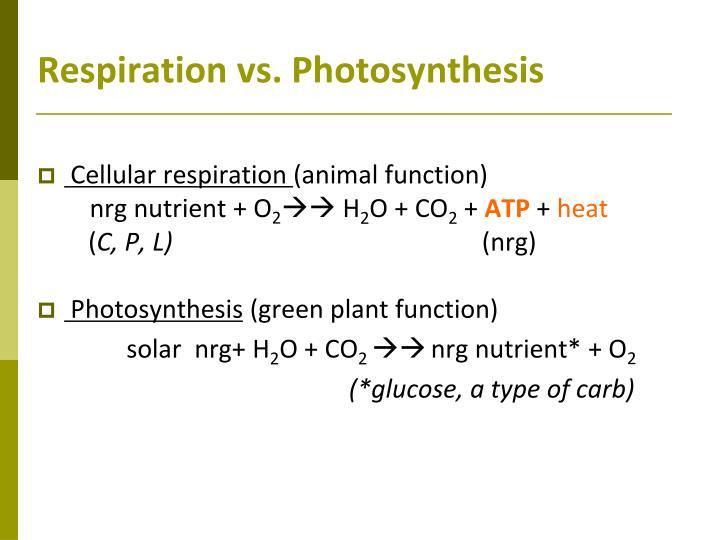 Respiration vs. Photosynthesis