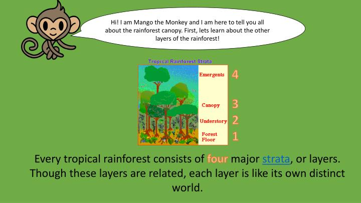 Hi! I am Mango the Monkey and I am here to tell you all about the rainforest canopy. First, lets lea...