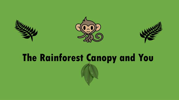 The rainforest canopy and you
