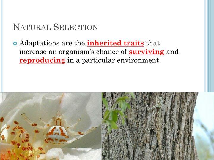 Natural Selectio